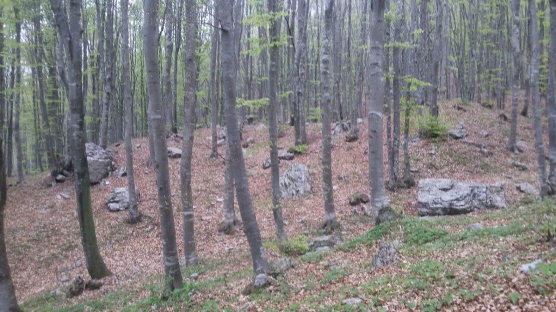 fupiano - terrain per sito 4