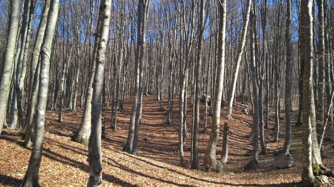 fupiano - terrain per sito 1