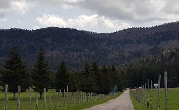 Il bosco del Cansiglio