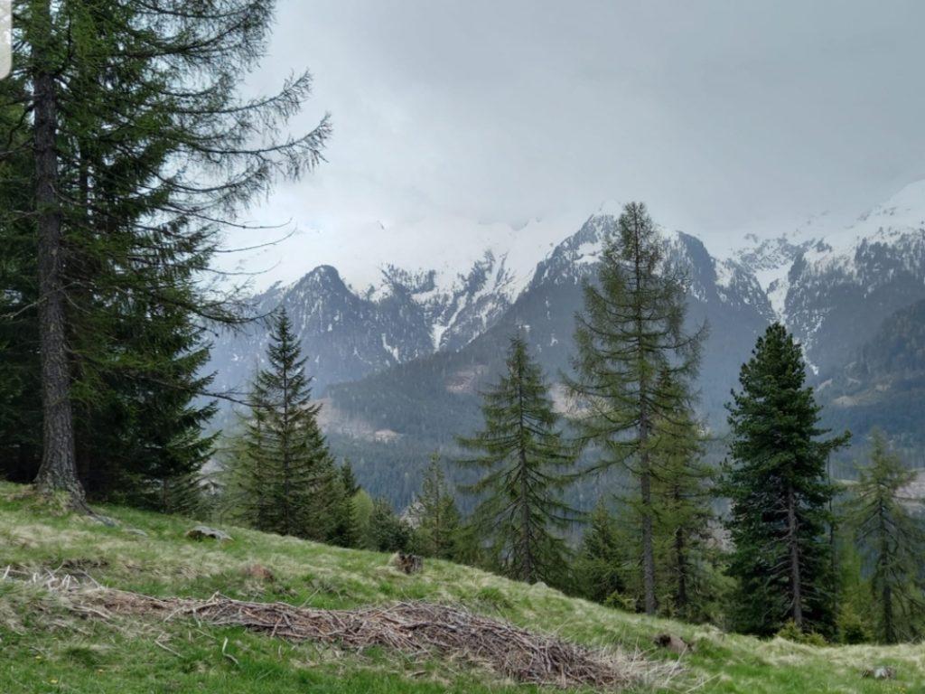 Il bosco a Bellamonte